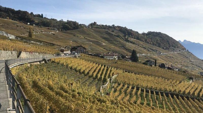 Coteaux de Lavaux et Mont Pèlerin depuis Lausanne